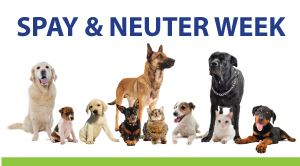 Image result for spay and neuter week